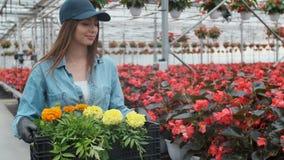 Lycklig industriell växthusarbetare Carry Boxes Full av blommor Le och lycklig kvinna med blommor henne som växer stock video