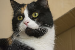 Lycklig inomhus katt fotografering för bildbyråer