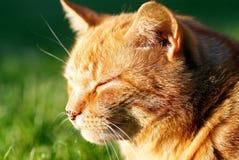 lycklig katt Arkivbilder