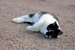 lycklig katt Arkivbild