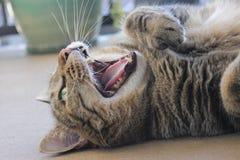 lycklig katt royaltyfri foto