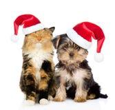 Lycklig katt och valp i röda julhattar som tillsammans sitter Isolerat på vit Royaltyfri Bild
