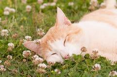 Lycklig katt som fridfullt sover Royaltyfria Foton