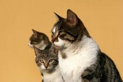 lycklig kattfamilj Arkivbilder