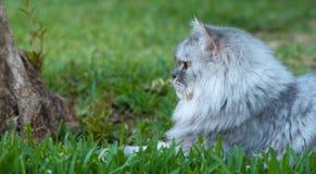 Lycklig kattstående Arkivfoton