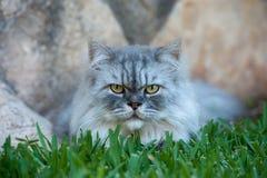 Lycklig kattstående Fotografering för Bildbyråer