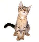 lycklig kattunge arkivfoto