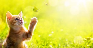 Lycklig kattunge för konst; Gulliga kattlekar med en fjäril royaltyfri fotografi