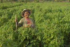 lycklig kvinna för bonde Arkivfoton