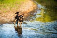 Lycklig mörk hund Royaltyfri Fotografi