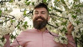 Lycklig man i rosa skjorta med härligt landskap av den fulla blommande körsbärsröda blomningen i vårtid Härlig vårtid arkivfilmer