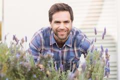 Lycklig man som luktar hans lavendelväxt Royaltyfria Foton