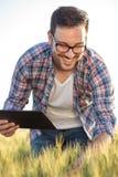 Lycklig millennial bonde eller agronom som kontrollerar veteväxter i ett fält för skörden royaltyfri bild