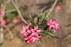 Lycklig morgon för trevlig blomma royaltyfria bilder