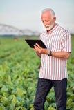 Lycklig och tillfredsställd hög agronom eller bonde som använder en minnestavla i sojabönafält royaltyfria bilder