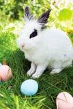 Lycklig påsk! Bakgrund med färgrika ägg i korg Arkivbilder