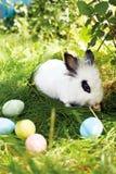 Lycklig påsk! Bakgrund med färgrika ägg i korg Arkivfoto
