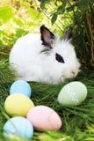 Lycklig påsk! Bakgrund med färgrika ägg i korg Royaltyfri Fotografi
