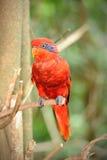 Lycklig papegoja i den Singapore zooen Royaltyfri Foto