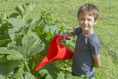 Lycklig pojke som bevattnar grönsaker i trädgården Grön gräsbakgrund Royaltyfria Bilder