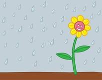 Lycklig regnig blomma Arkivbilder