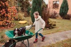 Lycklig rolig barnflicka som rider hennes hund i skottkärra i höstträdgården, frankt utomhus- tillfångatagande Arkivbilder