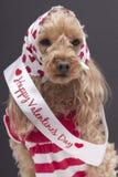 lycklig s valentin för dag Royaltyfria Foton