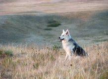 Lycklig sammanträdehund i prärie Arkivfoto