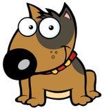 lycklig sittande terrier för brun tjur Arkivfoto