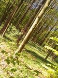 Lycklig skog arkivbilder