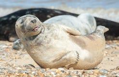 Lycklig skyddsremsavalp på en strand arkivfoton