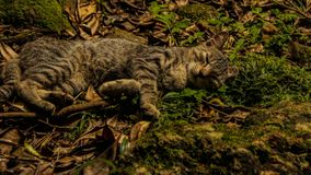 Lycklig sova kattunge Arkivfoto