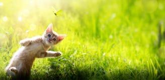 Lycklig spela katt p? utomhus- bakgrund f?r gr?n sommar royaltyfria foton
