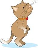 lycklig standing för katt Arkivfoton