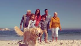 Lycklig storfamilj som går med hunden arkivfilmer