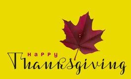 Lycklig tacksägelsekalligrafitext och höstlönnlöv Hälsningkort för tacksägelsedag stock illustrationer