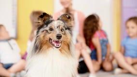 Lycklig terapihund i förträningen lager videofilmer