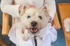 Lycklig terapihund på varv av den vuxna personen i avgångomsorghem fotografering för bildbyråer