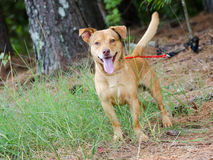 Lycklig Terrier blandad avelhund Royaltyfri Fotografi