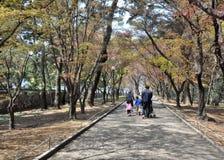 Lycklig tid för familj som går i parkera i Korea Arkivfoto