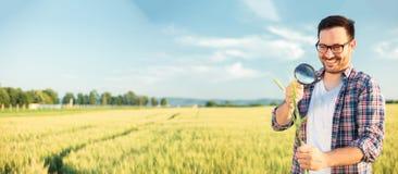 Lycklig ung agronom eller bonde som kontrollerar veteväxtstammar med ett förstoringsglas Aspektförhållande för bred skärm, panora arkivbilder