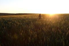 Lycklig ung flicka med långt härligt håranseende i ett vetefält i ljust solljus royaltyfri fotografi
