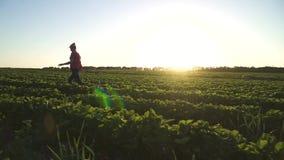Lycklig ung flickaspring på solnedgången på jordgubbefältet i ultrarapid stock video
