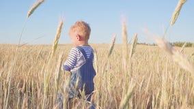 Lycklig ung pojke som går på fält med mogen råg på ultrarapid för solig dag Begrepp arkivfilmer
