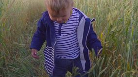 Lycklig ung pojke som går på fält med vete på den soliga dagen begrepp av den lilla bonden stock video