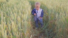 Lycklig ung pojke som går på fält med vete på den soliga dagen begrepp av den lilla bonden arkivfilmer