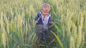 Lycklig ung pojke som går på fält med vete på den soliga dagen begrepp av den lilla bonden långsam rörelse lager videofilmer