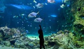 Lycklig unge observera fiskar på ett stort akvarium arkivfoto