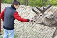 Lycklig unge som matar en hjort från zoo royaltyfria foton