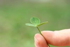 lycklig växt av släkten Trifolium Arkivbild